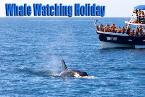 The Ins-and-Outs of Whale Watching